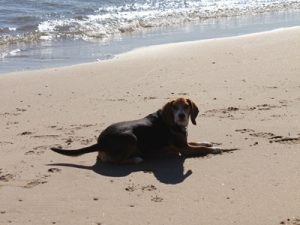 vacation_rental_dog_on_beach